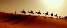 Bikaner - Camel Safari