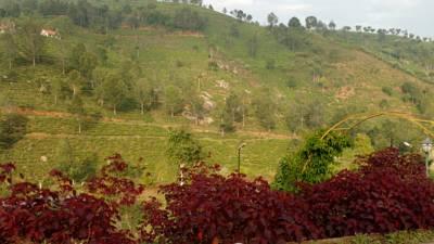 42 Green Pastures, Coonoor City, Kerala, India