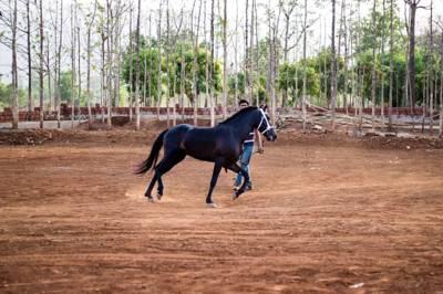 1873 Equestrian Lifestyle Resort, Karjat, Maharashtra, India